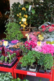 An Italian flower market. Italy is one of my fave places in the world!