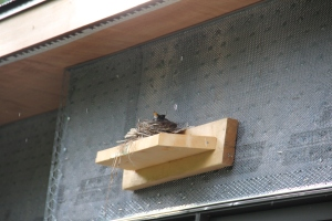 We are evidently not the first occupants of the house.  A bird made its nest on this ... thing.  It is a temporary piece put up as a step or hand hold on the outside of the house, we think.  It's above our bathroom window.  Hope the birdies hatch and move away before they stucco!