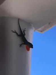 geckos everywhere!